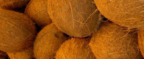 coconuts-1328822